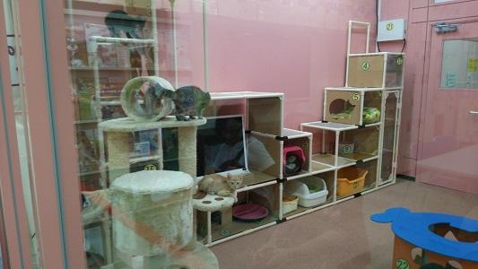 名古屋市動物愛護センター ネコルーム