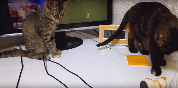サッカーに全く興味を示さない仔猫たち