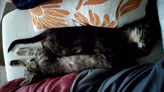 狭い場所で伸びて寝るジャガーとミック
