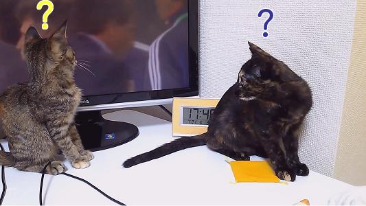ようやくサッカーに興味を示す仔猫たち