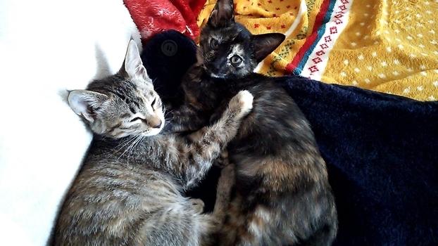 食べて満足して寝る仔猫たち