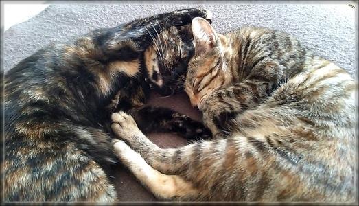 第1回 カワイイ寝顔選手権 1位 ミックとジャガー仲良く寝る