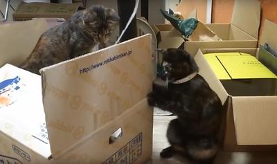 最後は2匹とも箱の外に出てきて紐で遊びました