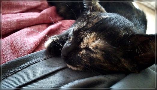 第1回 カワイイ寝顔選手権 2位 ジャガー腹の上で寝る