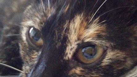 サビ猫の目