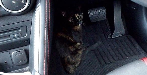 車内をウロウロするジャガー