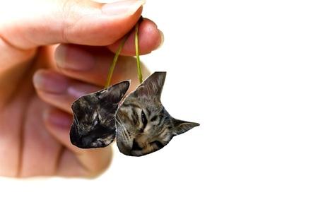 さくらんぼ猫