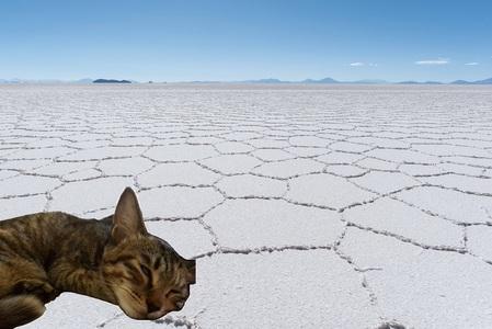 乾いた大地に猫