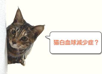 猫汎白血球減少症は伝染力NO.1の...