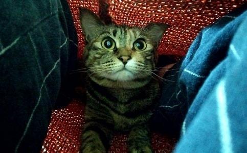元気な表情の猫