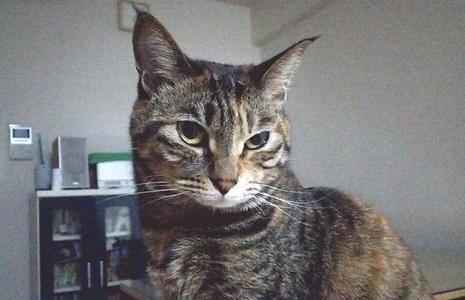 ホルネル症候群っぽい症状が出ている猫