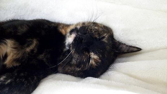 家族と別れることになるとは知らず、幸せそうに寝るジャガー