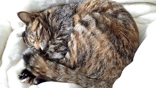 苦しそうに寝る猫