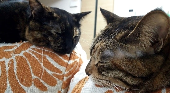 一緒に寝ているミックとジャガー