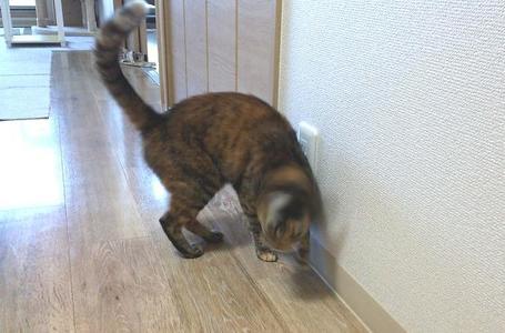 ミックの猫ドリル