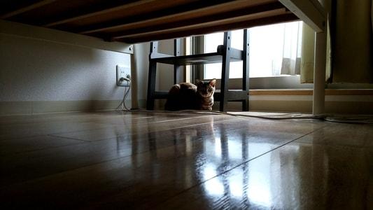 ベッドの下に逃げるミック