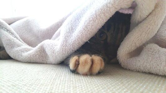 ソファーの上で寝るミック2