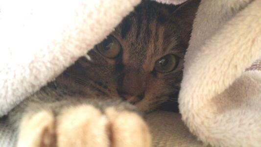 ソファーの上で寝ていると思ったら起きてたミック