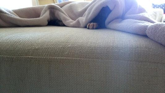 ソファーの上で寝るミック1