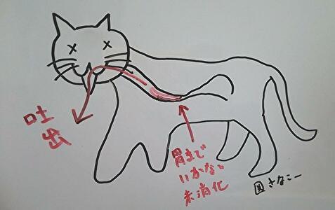 図 猫の吐出