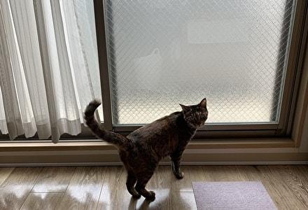 窓を開けて欲しいと伝えてくるミック