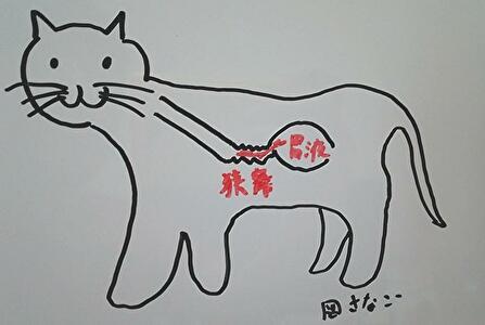 図 猫の食道狭窄