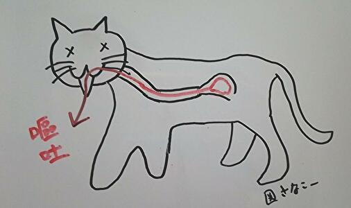 図 猫の嘔吐