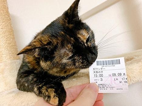 天気の子のチケットをかじるネコ