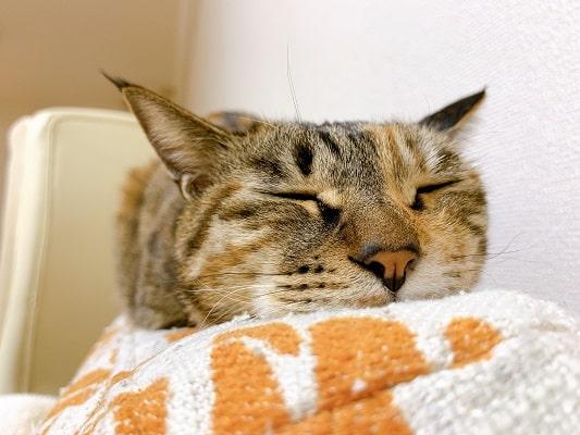 ソファーの上で眠るミック