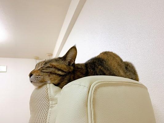 椅子の上で神々しく眠るミック